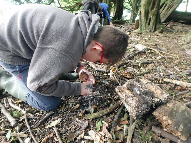 Grants are being made available for young people to carry out environmental projects
