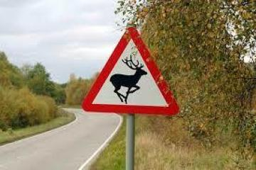 Warning to motorists as collisions with deer soar