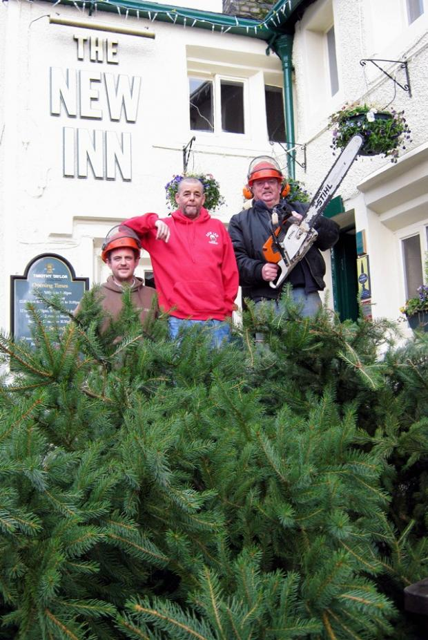 The giant Christmas tree at the New Inn, Cononley, is felled (from left) by Andrew Radcliffe, Ian Savoury and Robert Riley