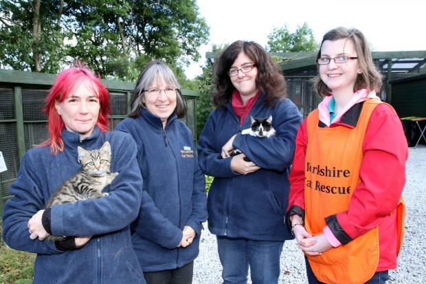 Yorkshire Cat Rescue's team, from left, Sam Davies with Tiger, Sara Atkinson, Catherine Price with Smudge and Jennifer Lee