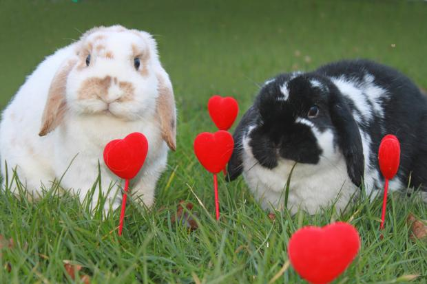 Keighley News: Keighley Vets4Pets is helping one lucky rabbit find its soulmate!