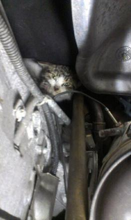 Engine was purring for Keighley feline