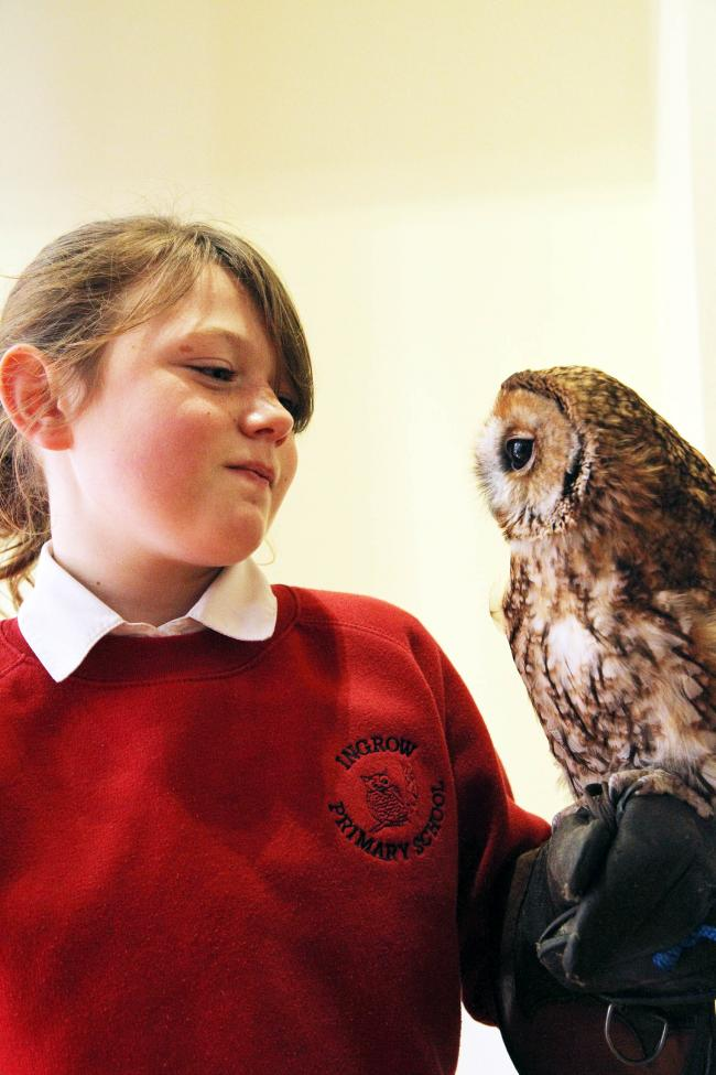 Birds of prey make flying visit to  Ingrow Primary School