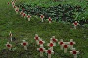 Poppy crosses on display in the grounds of Holy Family Catholic School