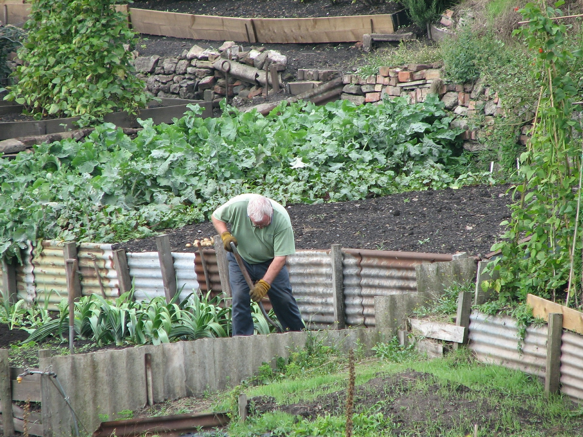 Surplus produce from Keighley Town Council allotments could be donated to deprived local people