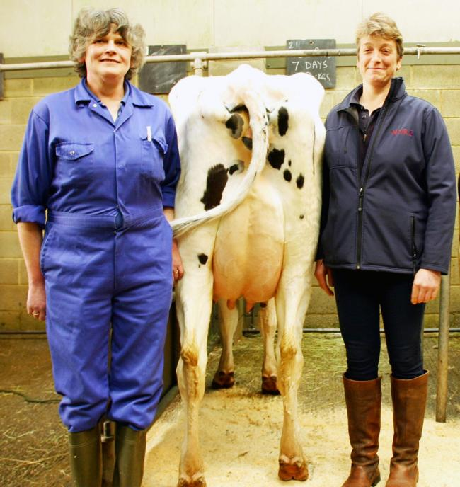 Sally Wellock is pictured left with her Craven Dairy Auction newly calven cow, joined by Helen Whittaker, of regular sponsors National Milk Records.